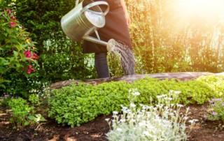 Protéger les végétaux contre la sécheresse