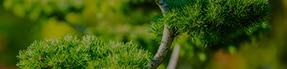 Plantations arbres et massifs