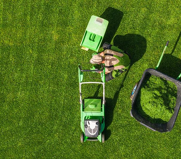 Tonte de pelouse dans le 77