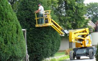 Quand tailler les arbres ?