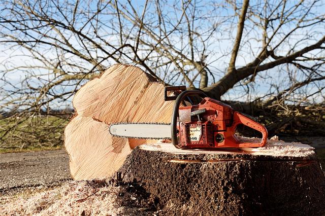 Comment abattre un arbre de 10 mètres ?